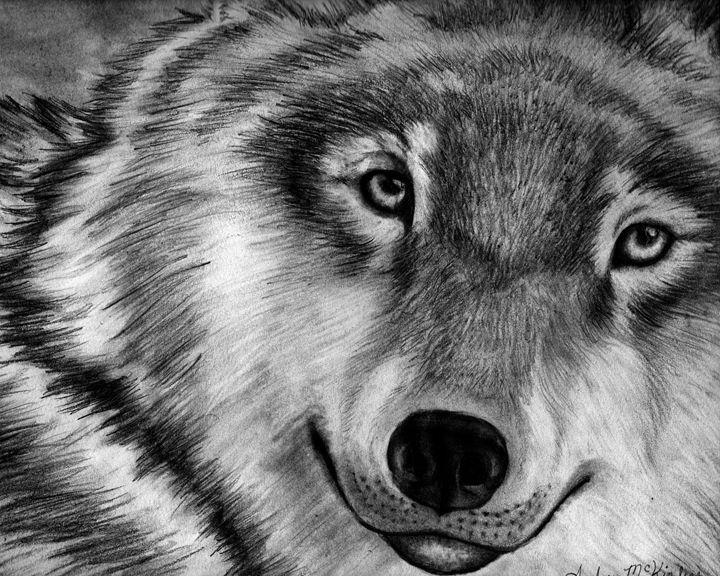 Lone Wolf Beauty - Dreaming of Animals Art by Amber McKinley