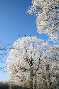 Winter Trees and Three Birds