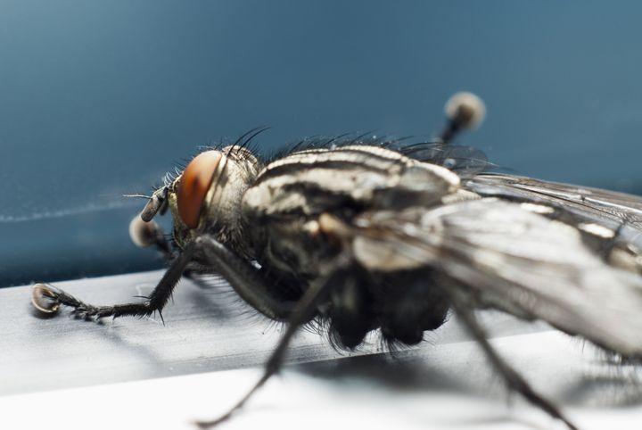 Fly - Igorsin Gallery