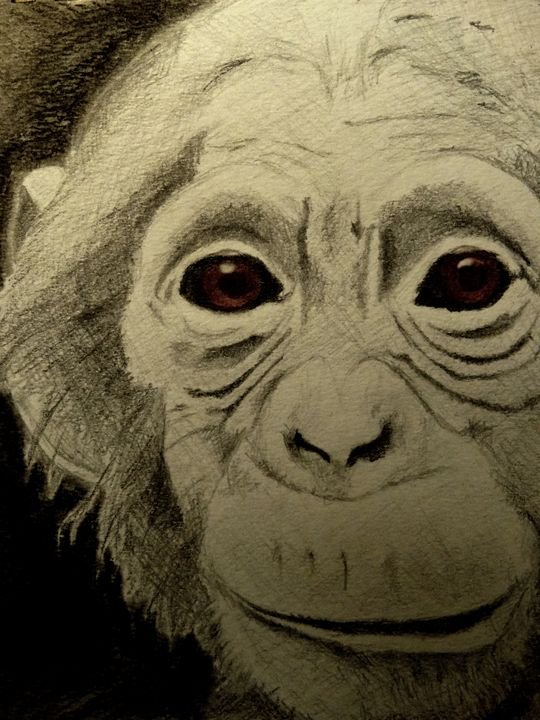 Chimpanzee - Wildlife on Paper