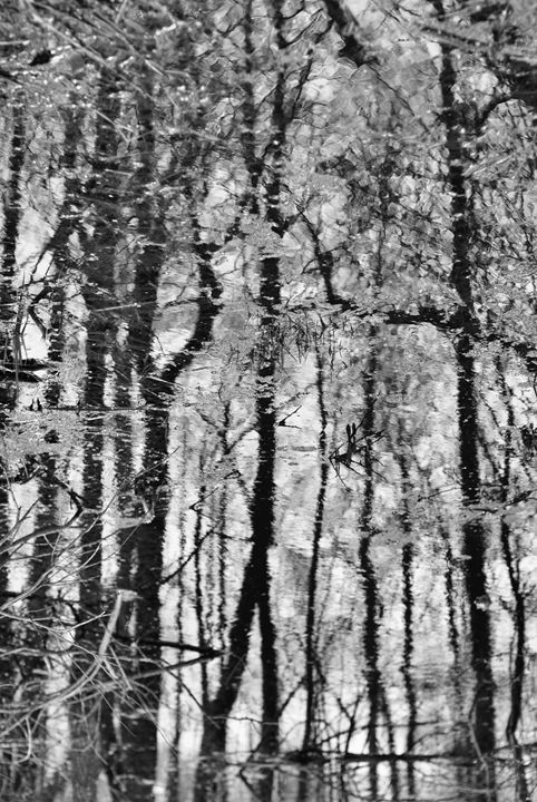 Forest through the water - Natasha Golubeva