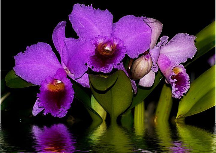 Orquideas con Reflejo - Zullian & Trompiz Galery