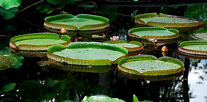 Plantas de Agua - Zullian & Trompiz Galery
