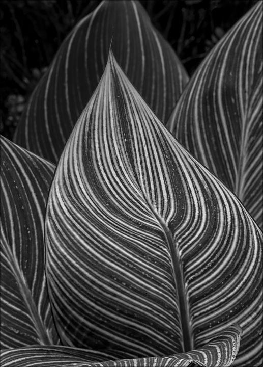 Rhythmic Leaves - Robert Daniel Ullmann Fine Art Photography