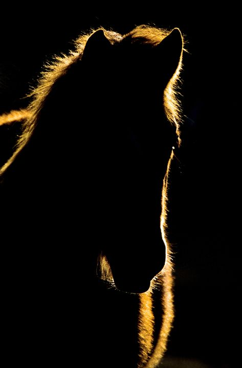 Sunset Horse Silhouette Canada - Fine Art Photography