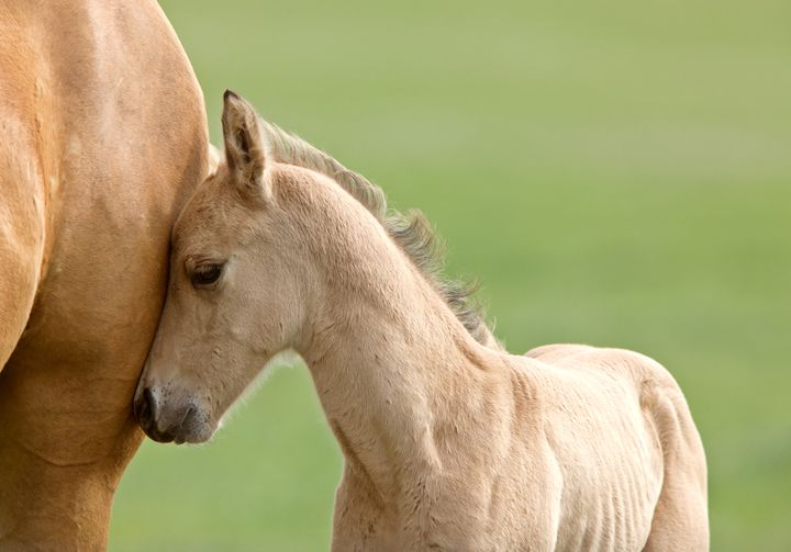 Horse and colt - Fine Art Photography
