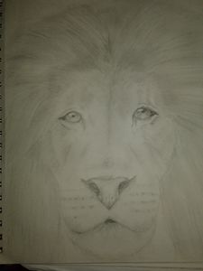 The dominant Male Lion
