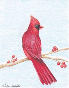 Cardinal on a limb