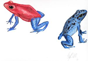 Poison Dart Frogs 2