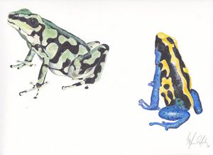 Poison Dart Frogs 1