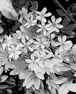 Black and white floral art