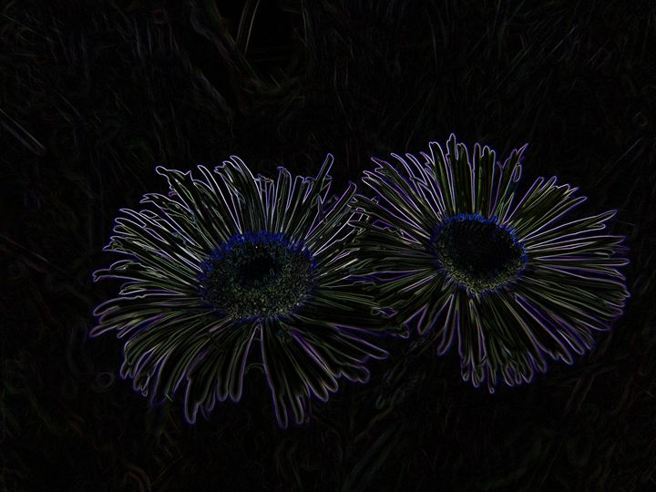 2 Flowers Etched - Tony Alexander Photography