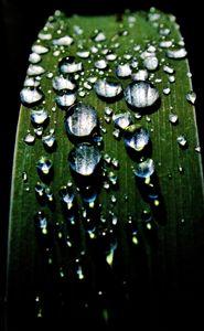 Dew. - Lens Print