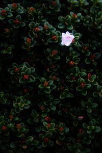 Flower - Lens Print