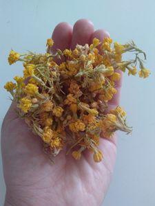 Dead yellow flowers