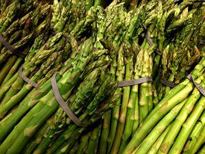 Asparagus - Katia Lima