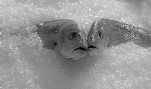 Fish & Ice - Katia Lima