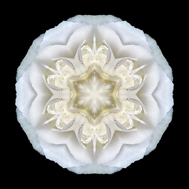 White Begonia II - Flower Mandalas