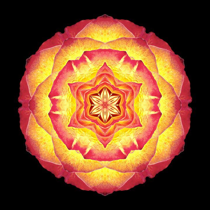 Yellow and Red Rose III - Flower Mandalas