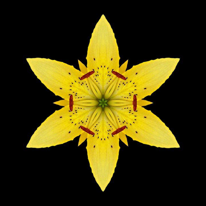 Yellow Lily I - Flower Mandalas