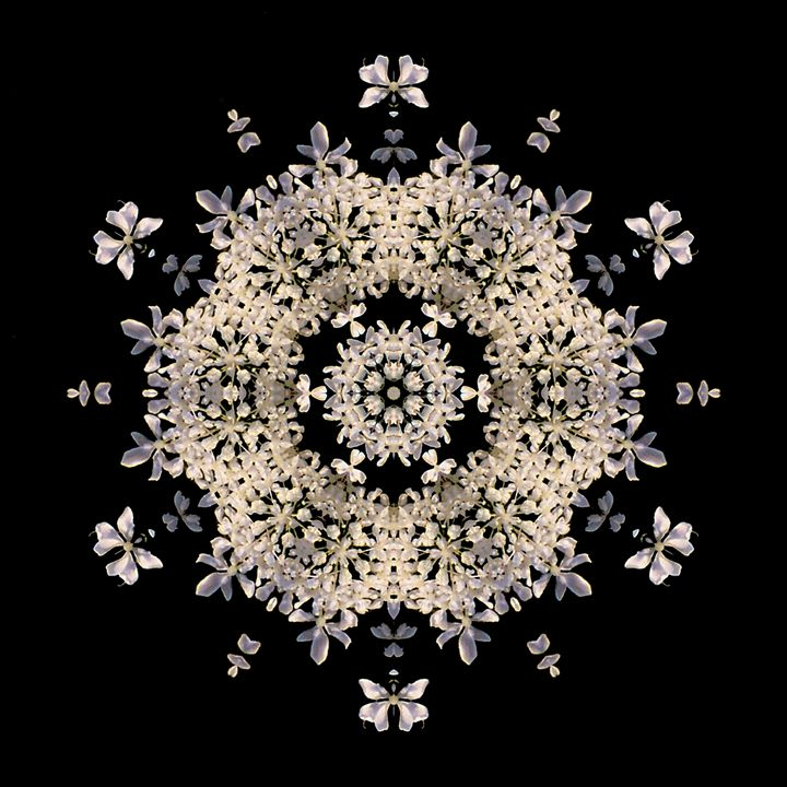 Queen Anne's Lace I - Flower Mandalas