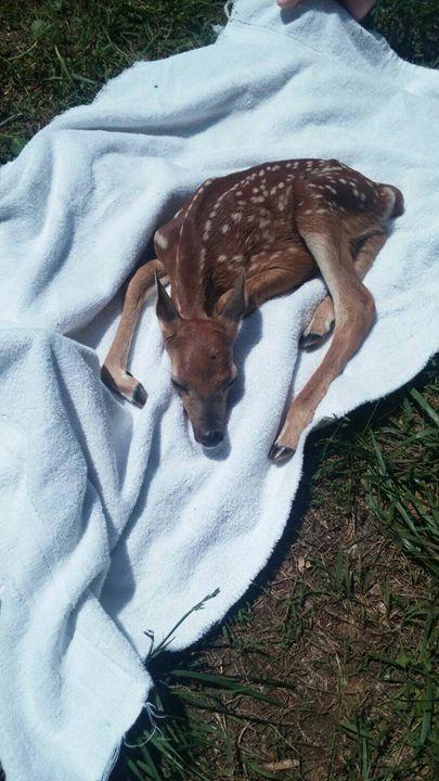 Deer - Alyssa Nichole