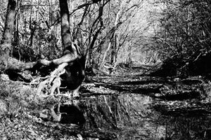 Creek Bed in Black and White
