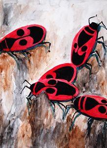 Pyrrhocoridae ( Firebugs )