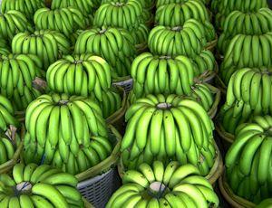 Rows and Rows of Bananas