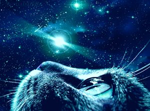 Feline Fantasy