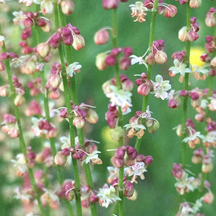 Flowers - Elizabeth Clark