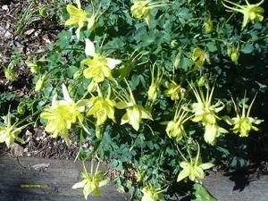 Yellow Flowers Green Bush