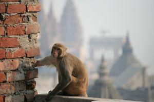 Guardian of Varanasi - Dano Vukicevich Photography
