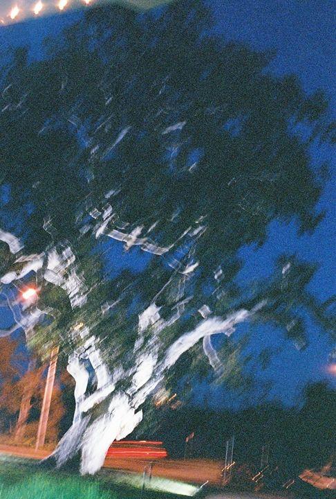 tree terror - Trevor Donoghue, Don't know you art