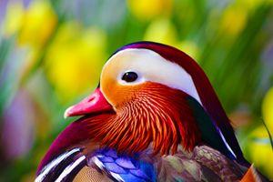 Duck Delight