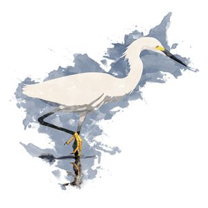 Snowy Egret - Watercolor Style