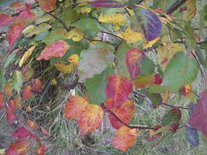 Autumn Leaves Globe