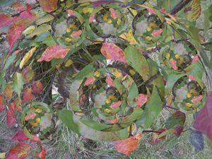 Autumn leaves Globulated