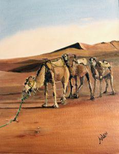 Just Us Camels