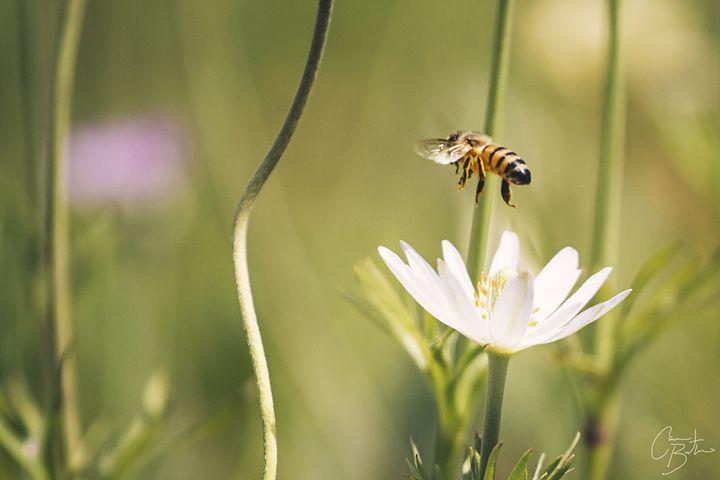 Bee Somebody - Cameron The Photographer