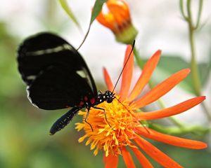 Fluttering for Food