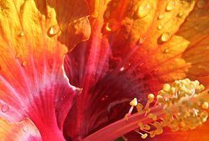 Hibiscus View