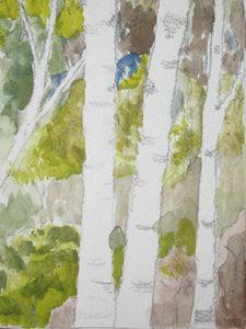 3 Birch