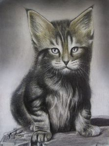 Maine Coon kitten in colored pencil