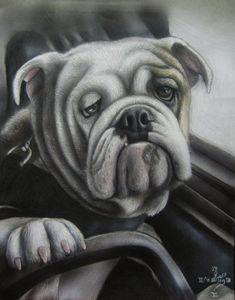 Bulldog at the wheel