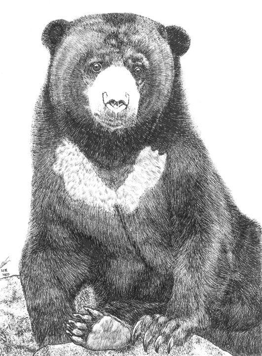Malayan sun bear (Beruang Madu) - Nasir Nadzir