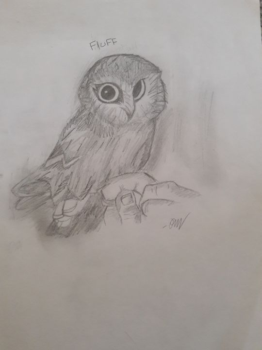 Owl drawing - Olivia's Cartoon drawings and greeting cards