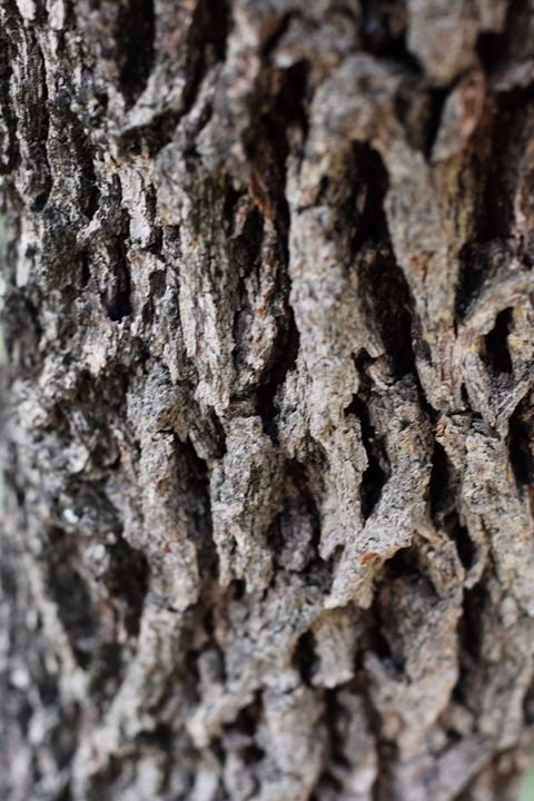 Bark - Anna | Reyna Photography