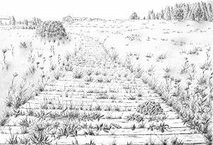 Path to the small village Kvilda