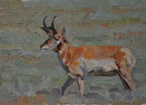 Prairie Goat